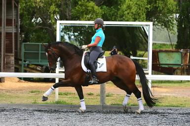 Powerful Extended Trot