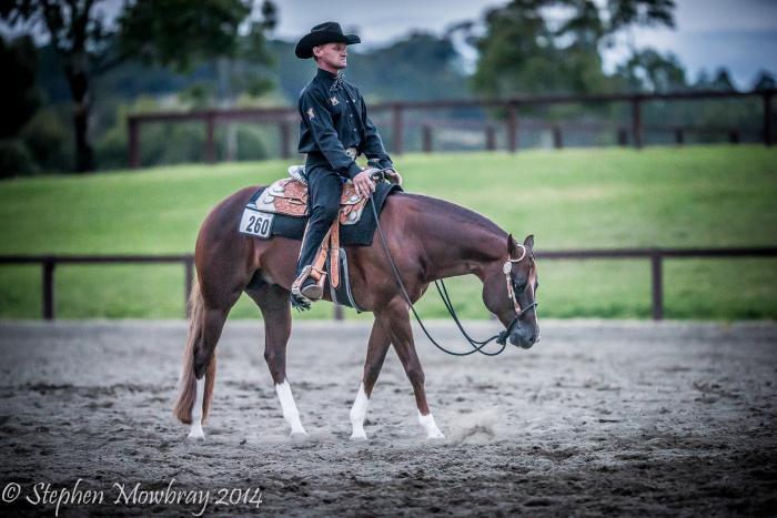 Sure A Fine Cowboy (IMP) Quarter Horse Stallion
