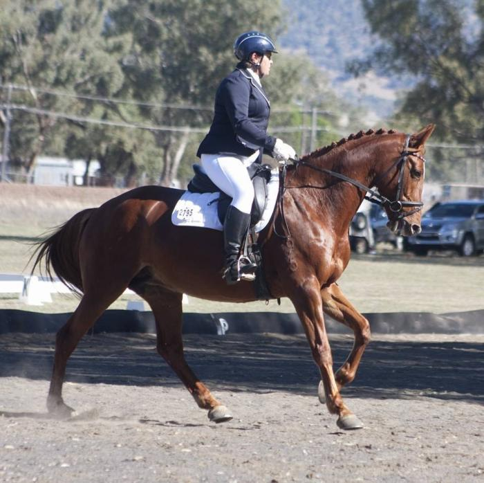 The Girlfriend - Easy going Dressage Mare