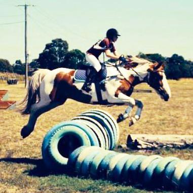 Kind 15'3hh clydesdale X QH pinto gelding