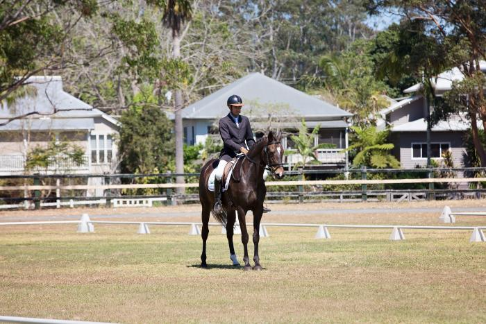 Warmblood Mare, Competing Novice, Serious offers