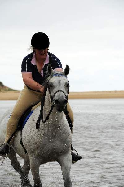 Purebred mare