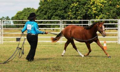 Yearling Lunge Line Class_May 2015
