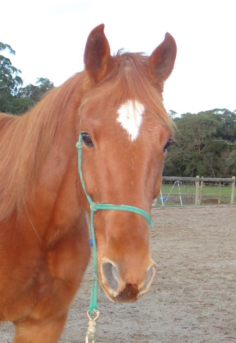 Tall Standardbred with potential