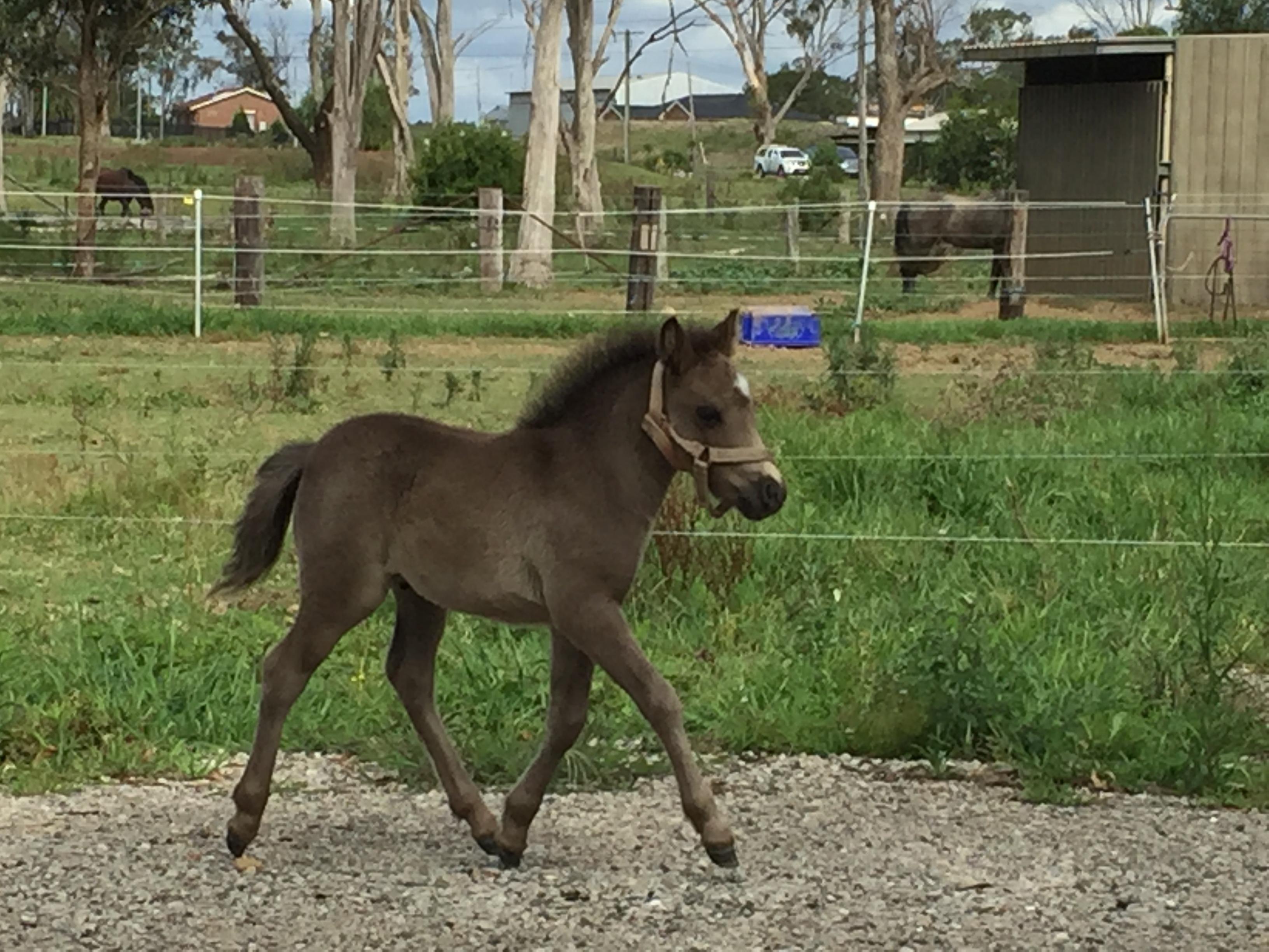 SMALL HORSE MARE