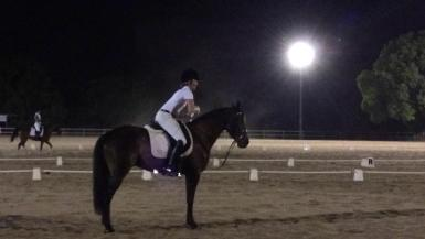 Fig Tree Pocket Dressage Jan 2014 1st Prelim 1.1