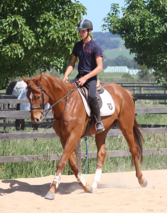 TB Gelding price reduced