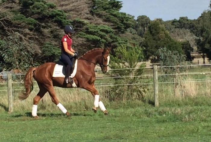 super young dressage horse with huge potential
