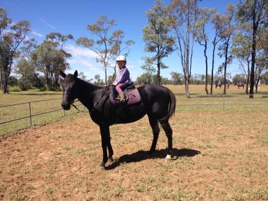 Ridden by 5 year old girl at pony club on own out in the open.