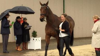 Melbourne Trot Up 2014