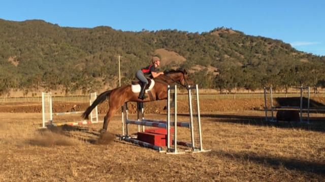 16.1hh Bay Thoroughbred