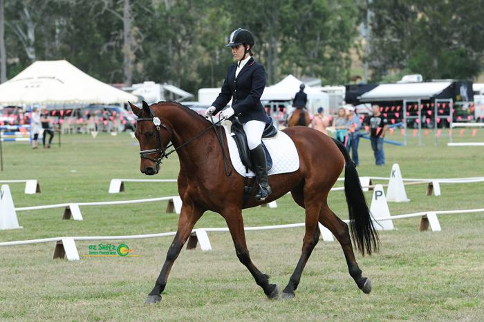 Cullendore Texan Exciting Young Eventing Prospect
