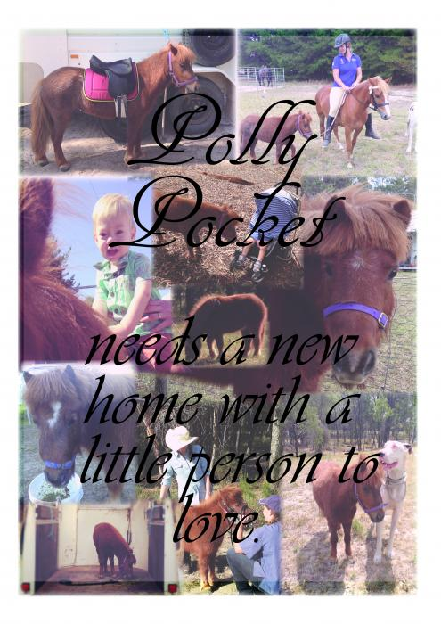 Polly Pocket's looking for her own little person