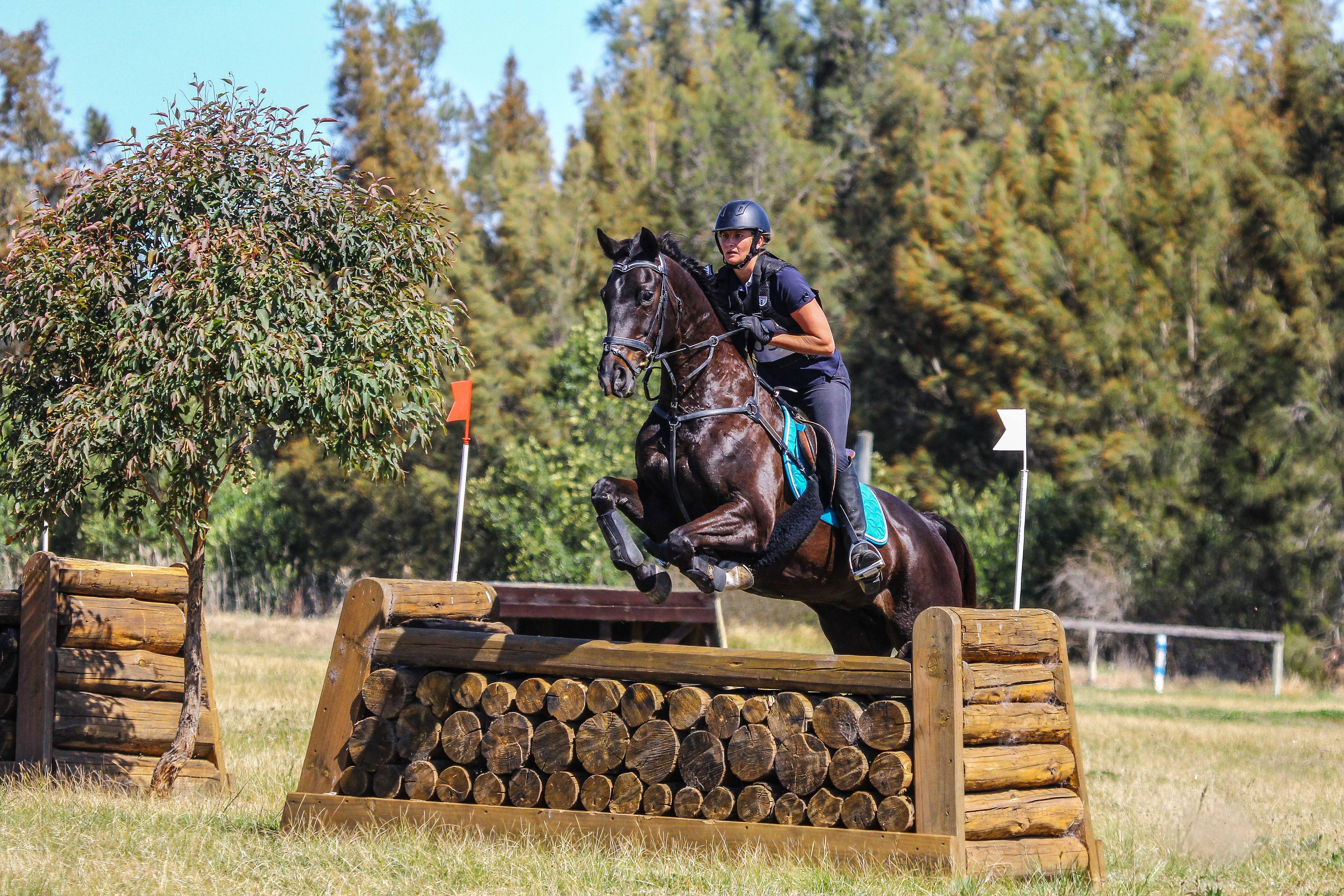 Eventer/Allrounder