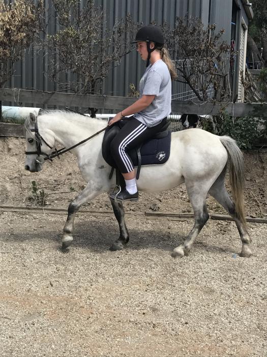 Super Cute Childs Pony