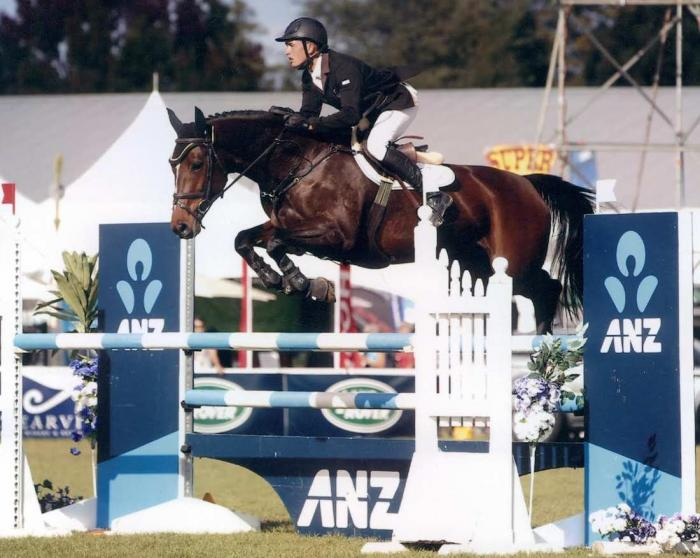 Quality NZ Showjumping/Eventing Broodmare