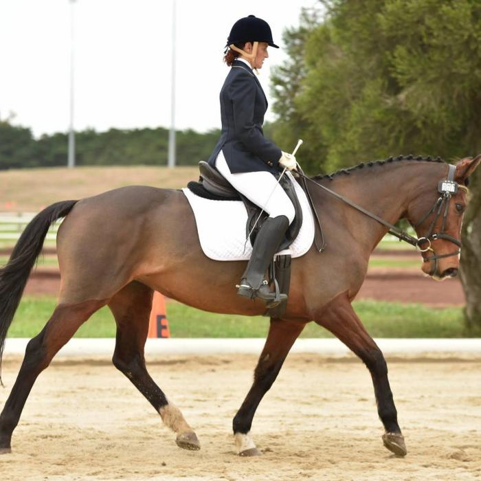 Consistently performed warmblood dressage mare