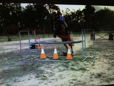 Super jumping horse
