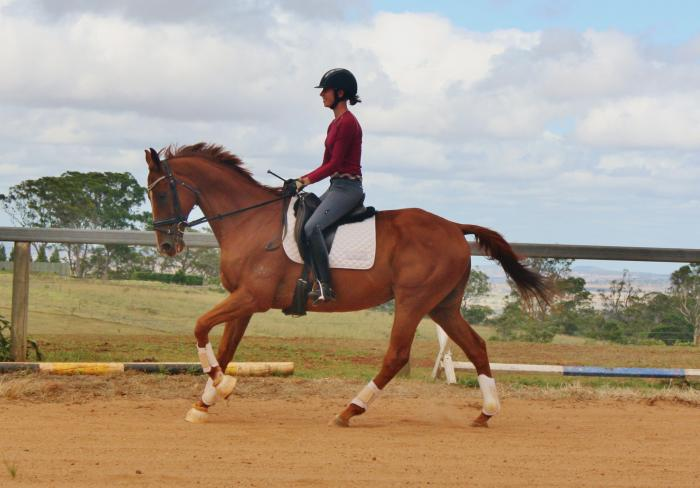 Reliable and fun all rounder gelding