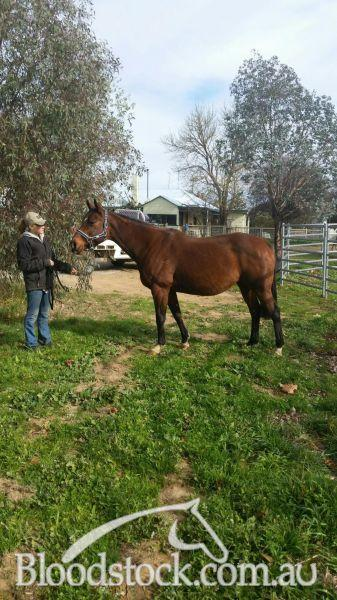 Lovely mare in foal to Shaft