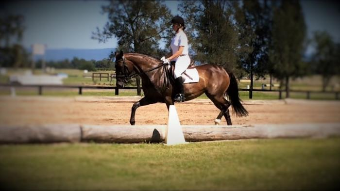 Tocal Dimity-Registed Stockhorse