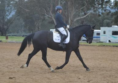 Young dressage Nov16