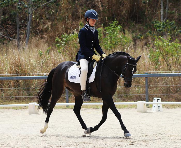 Perfect dressage pony