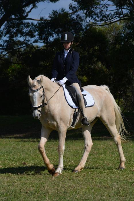 Allrounder Palomino Stock Horse