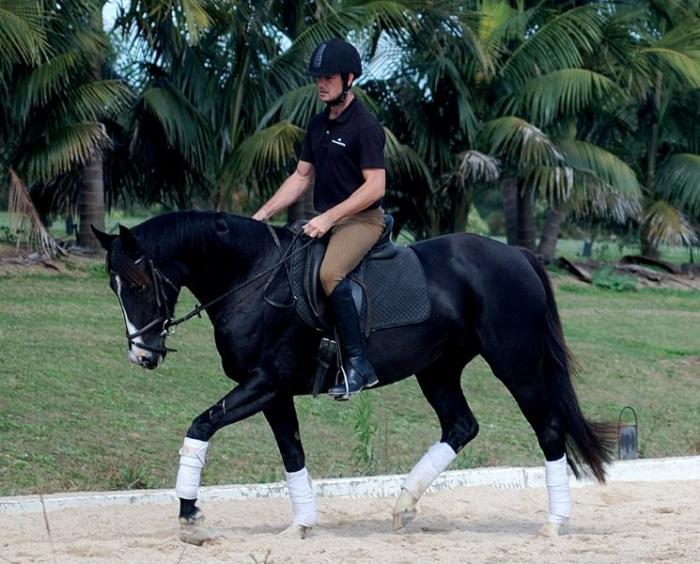 Beautiful black Fiji mare