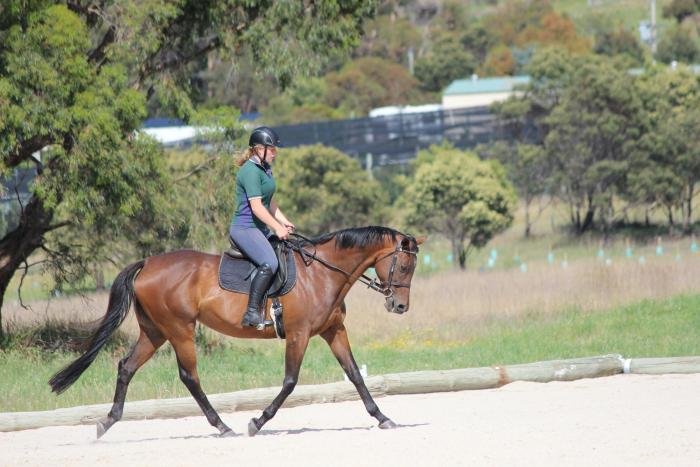 Eyecatching, kind and talented mare