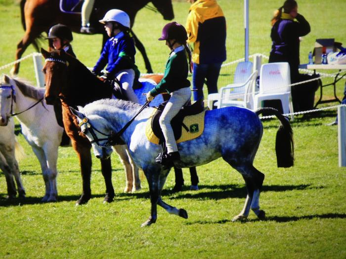 Competitive allrounder child,s pony
