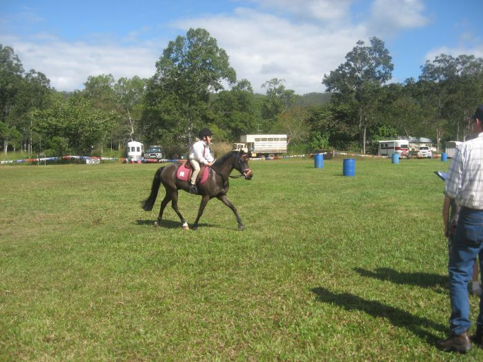 Cute 12.2hh Black Pony Gelding