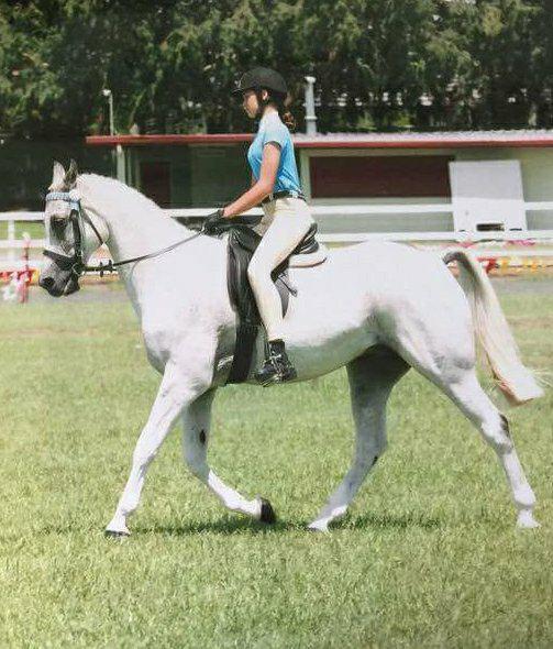 Ultimate Schoolmaster Horse