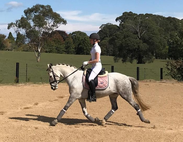 Dressage/Performance Pony