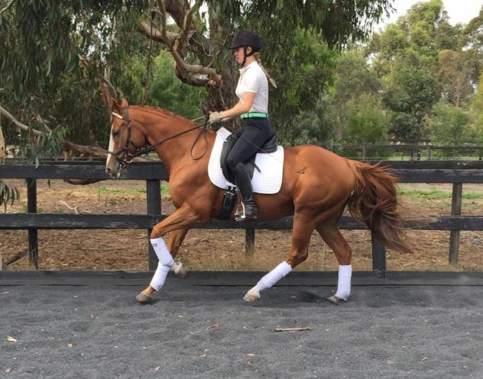Price Reduced - Stunning Dressage Gelding