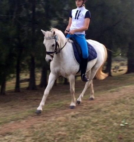 Gorgeous 12.2 HH Riding Pony gelding