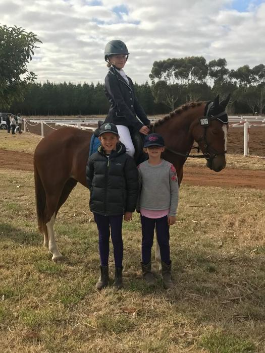 Young eventing show jumping gelding