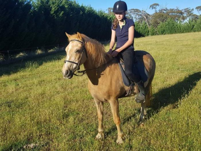 Palomino Pony Gelding For Sale