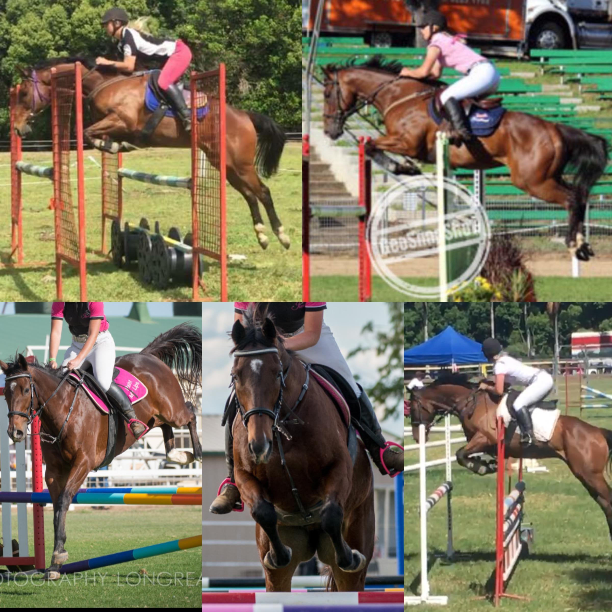Paint my lips - all rounder/showjumper