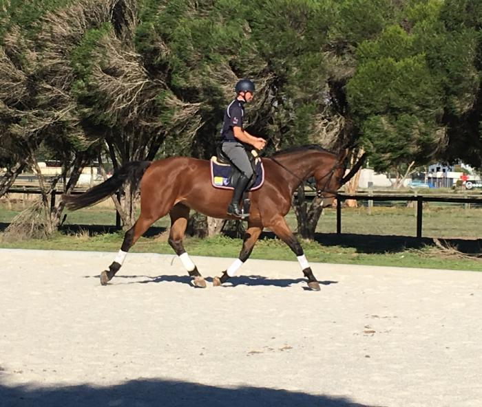 4yo by World Cup Showjumper Ego Casablanca