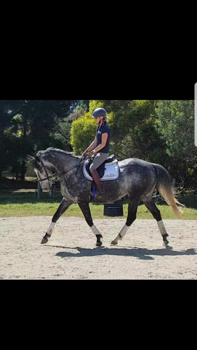 Super flash future performance horse