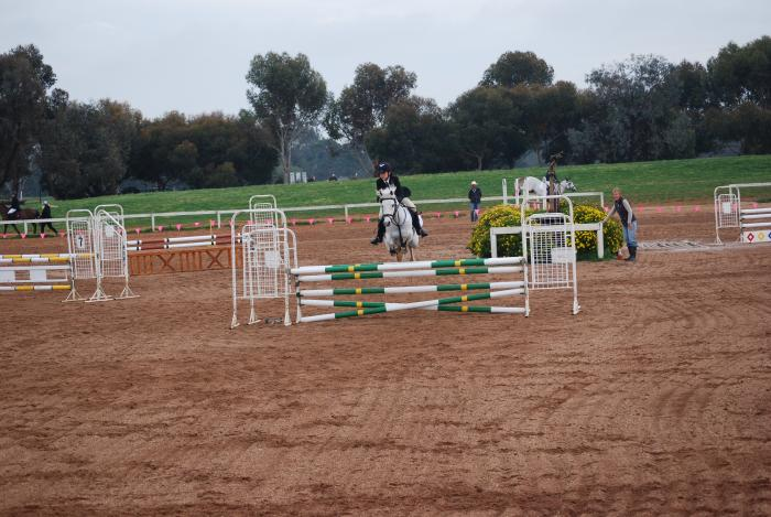 13.2h PONY -  Schoolmaster Showjumping Pony Club