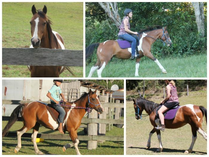 Pretty little bay tobiano pony mare for sale