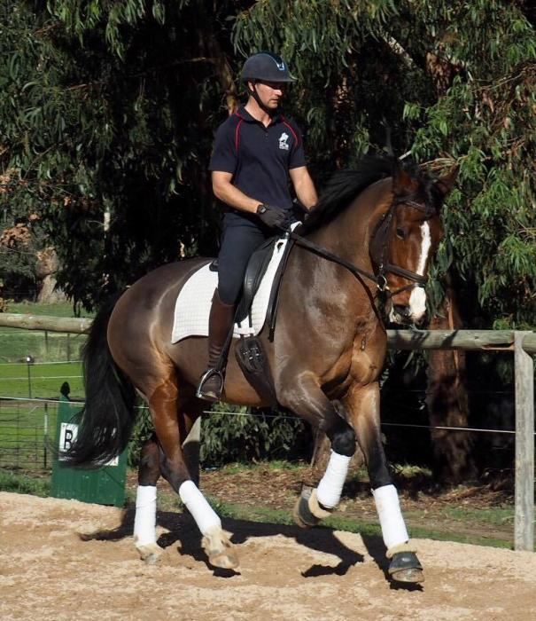 Talented Dressage Mare
