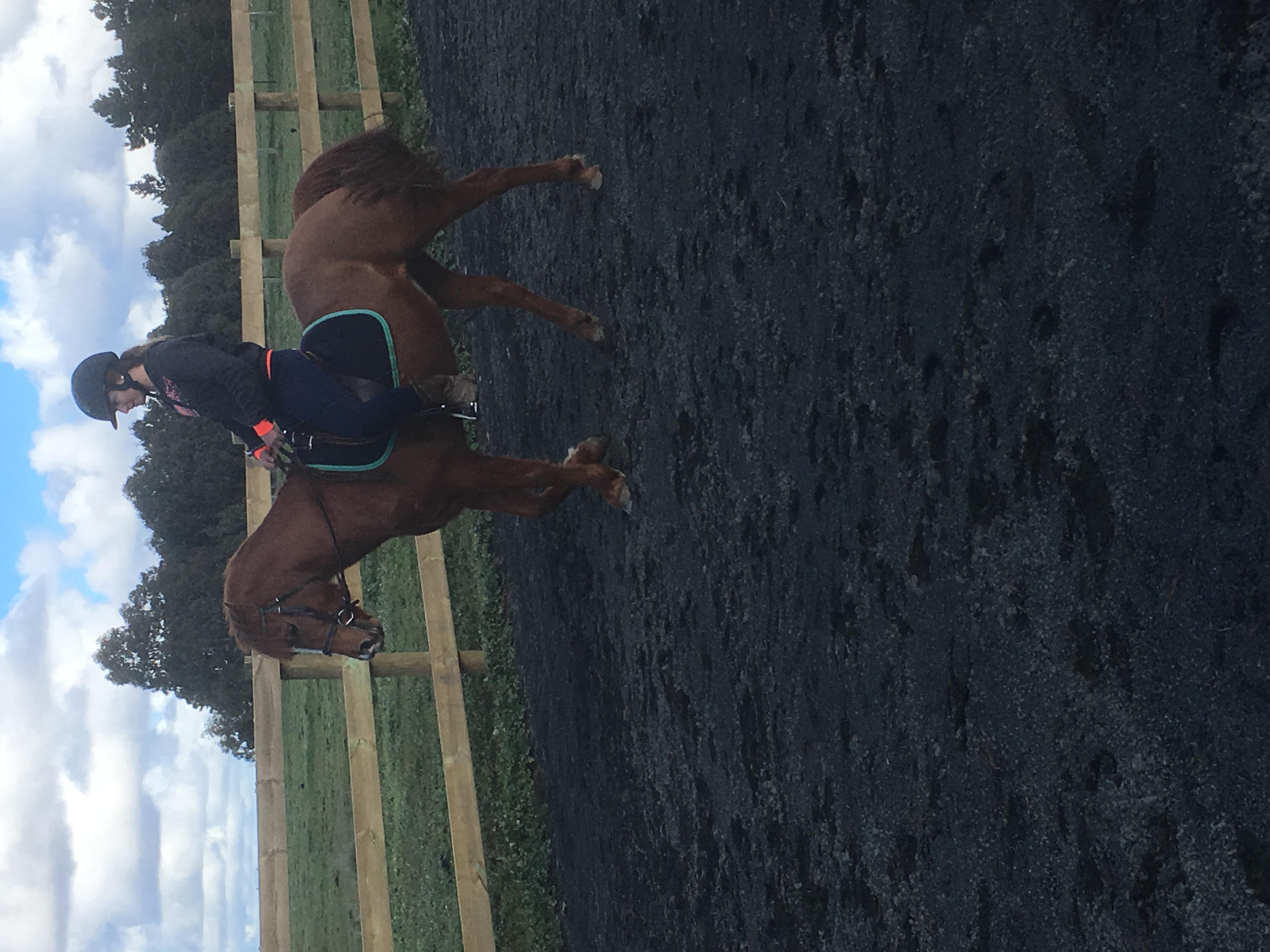Dressage 2nd Pony
