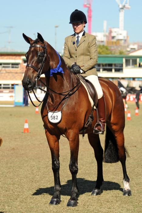 Royal Show Winner as Open Hack and Hunter