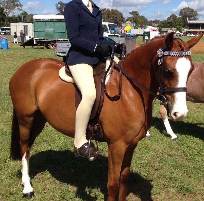 Stunning childs pony