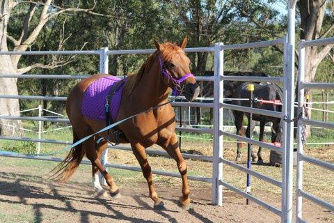 Chestnut Paint Mare