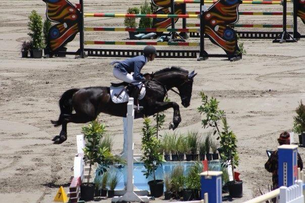 Competitive Young Rider/Junior Jumper