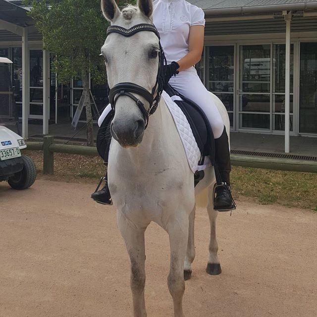 Super All Rounder Welsh/Australian Riding Pony
